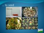 to seed