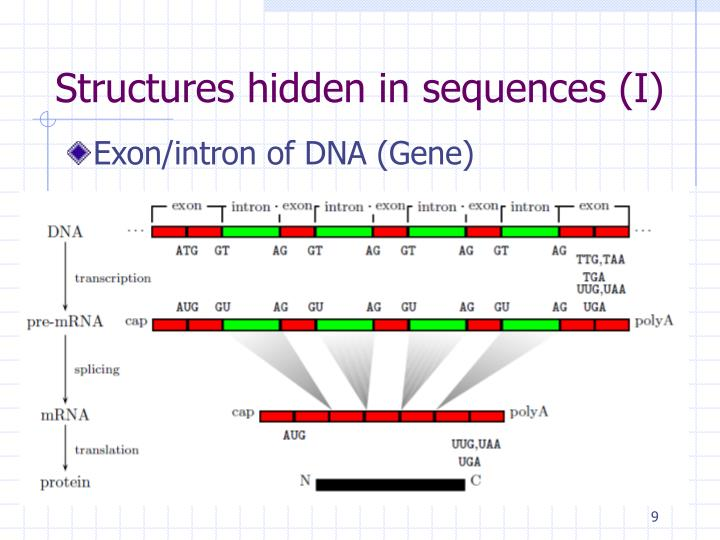 Structures hidden in sequences (I)