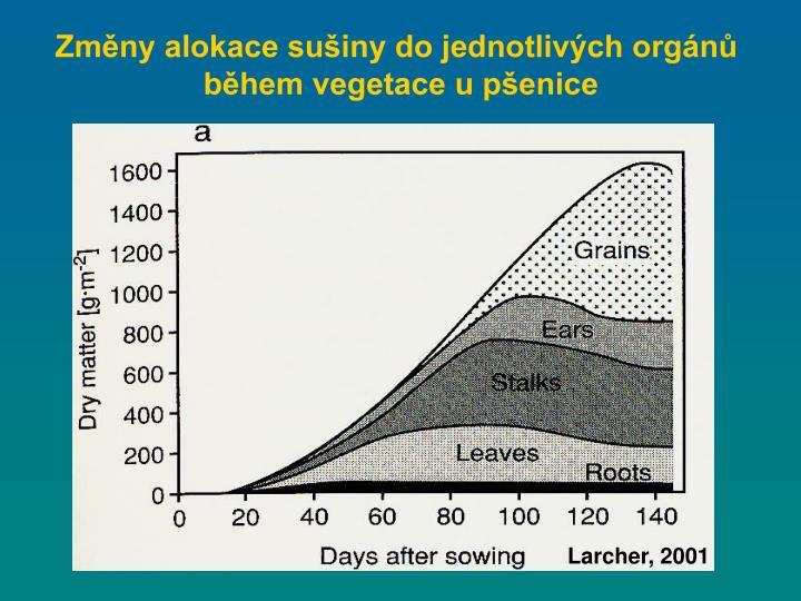 Změny alokace sušiny do jednotlivých orgánů