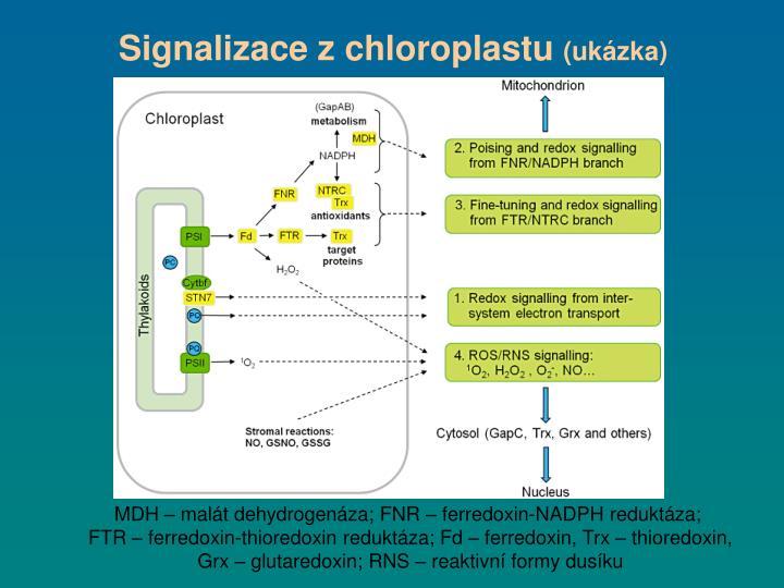 Signalizace z chloroplastu