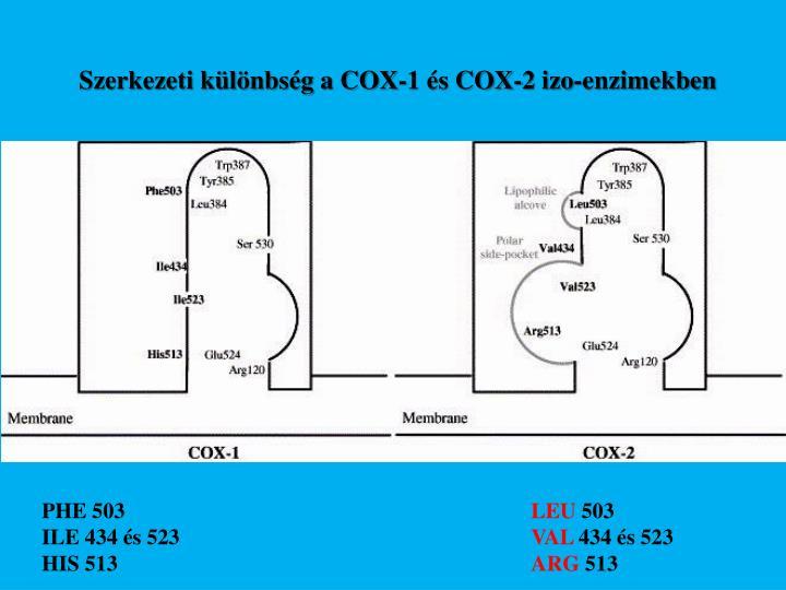 Szerkezeti különbség a COX-1 és COX-2