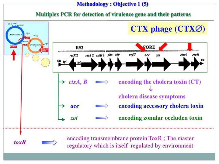 CTX phage (CTX