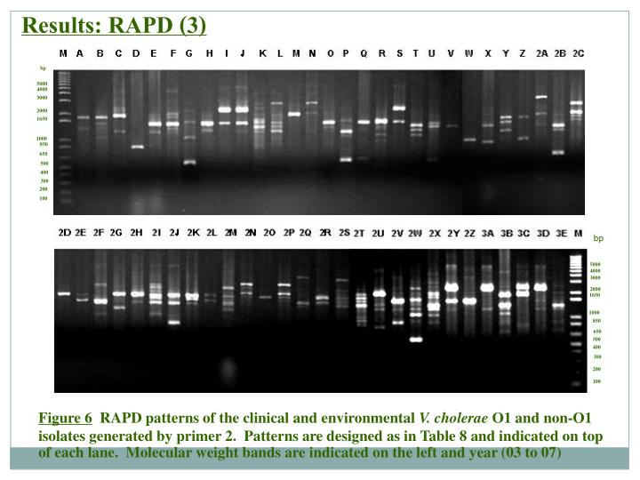 Results: RAPD (3)