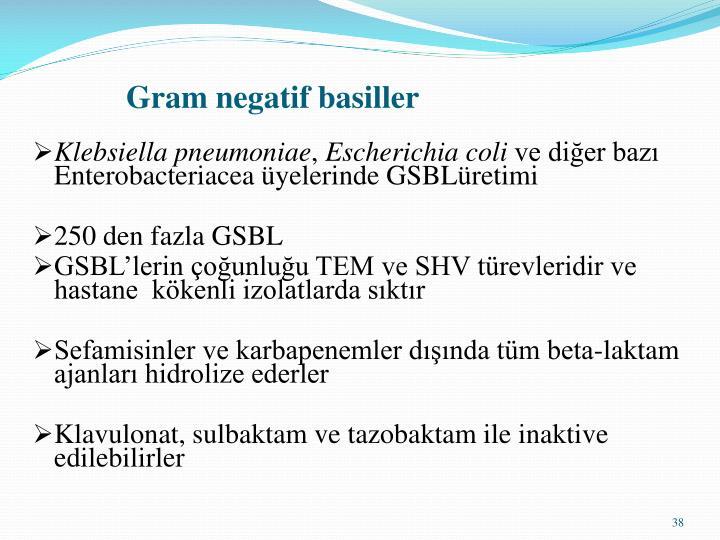 Gram negatif basiller