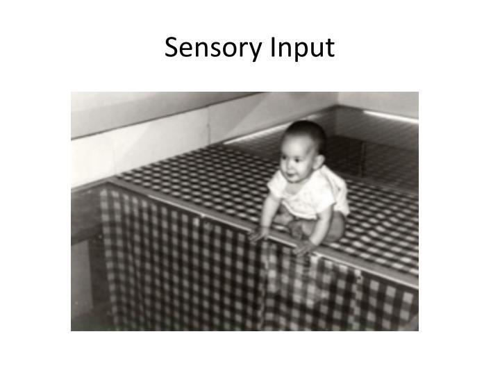 Sensory Input