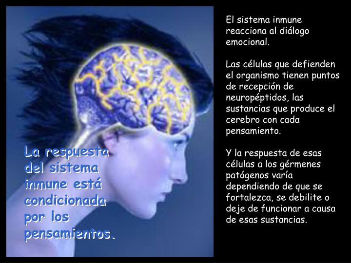 El sistema inmune reacciona al diálogo emocional.