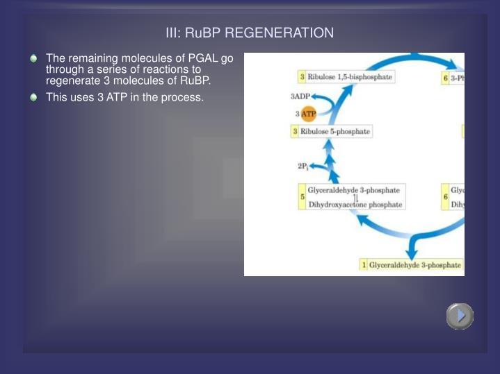 III: RuBP REGENERATION