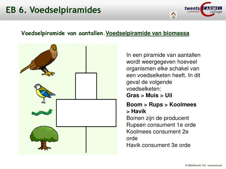 EB 6. Voedselpiramides