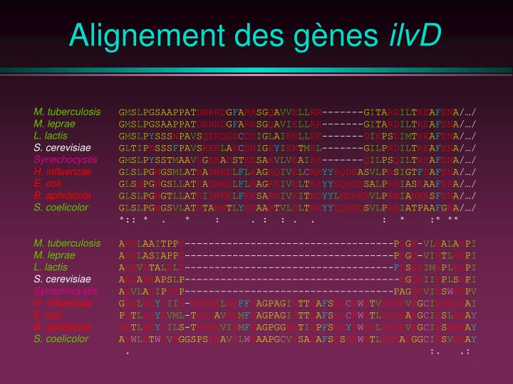 Alignement des gènes