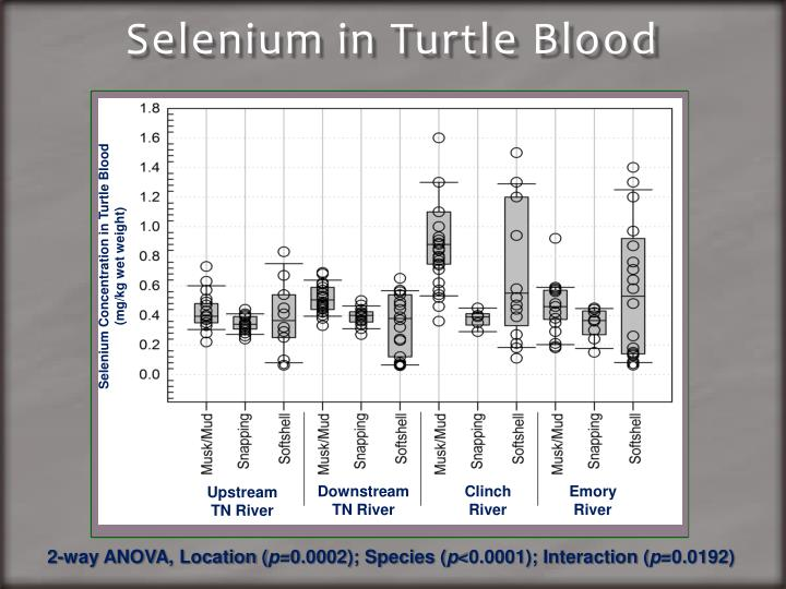 Selenium in Turtle Blood
