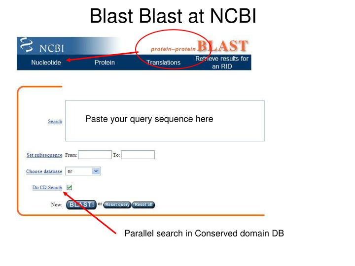 Blast Blast at NCBI
