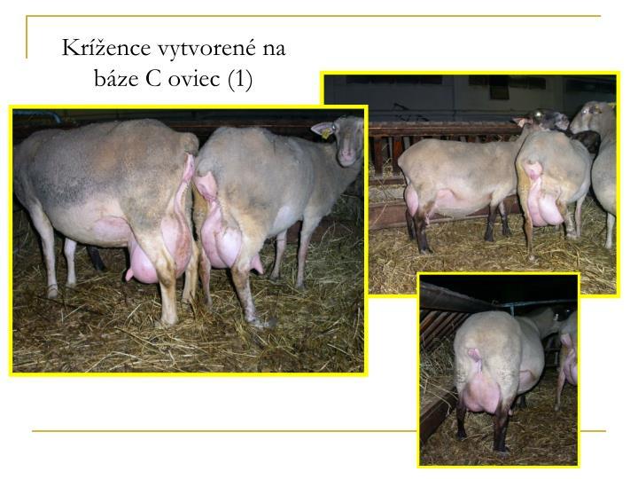 Krížence vytvorené na báze C oviec (1)