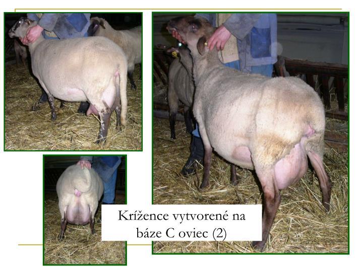 Krížence vytvorené na báze C oviec (2)