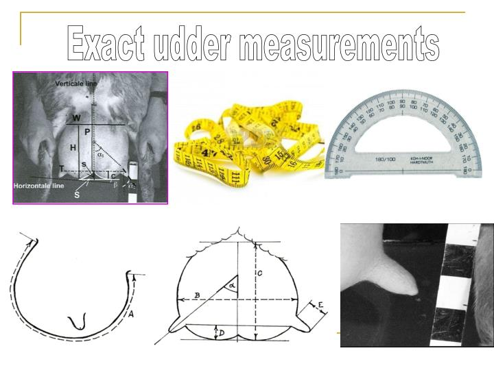 Exact udder measurements
