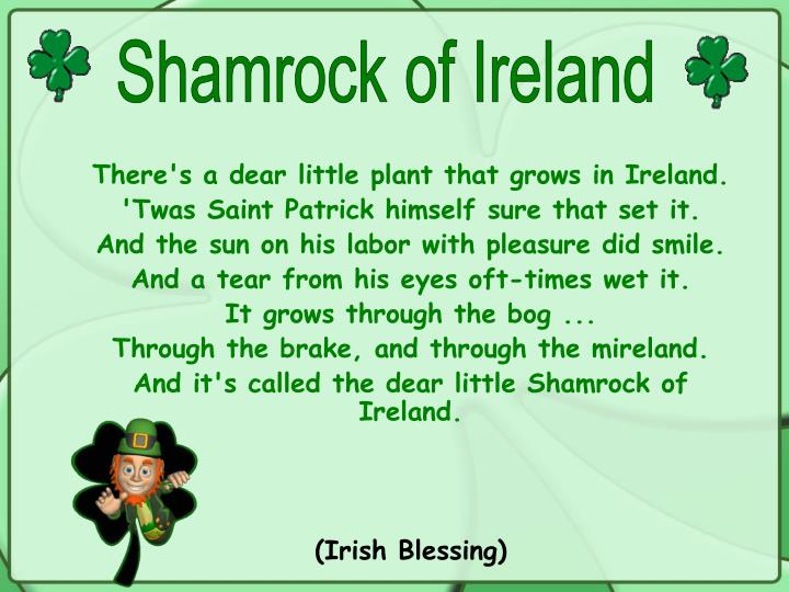 Shamrock of Ireland