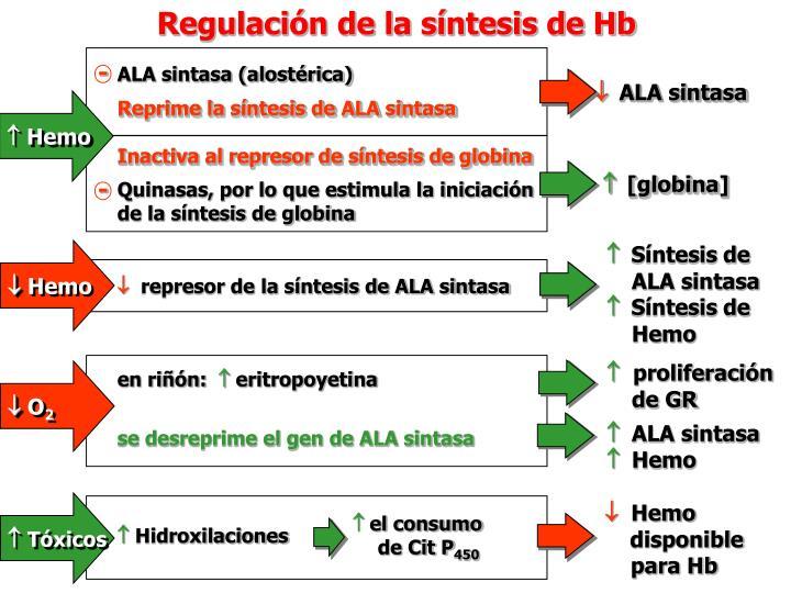 Regulación de la síntesis de Hb