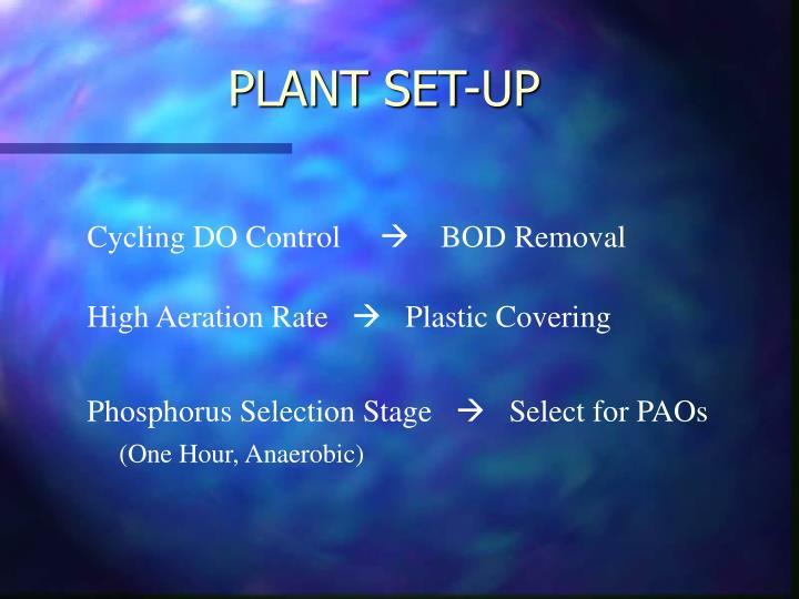 PLANT SET-UP