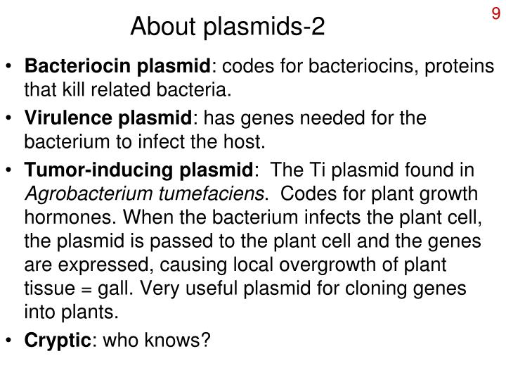 About plasmids-2