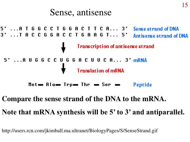 Sense, antisense