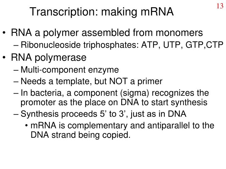 Transcription: making mRNA