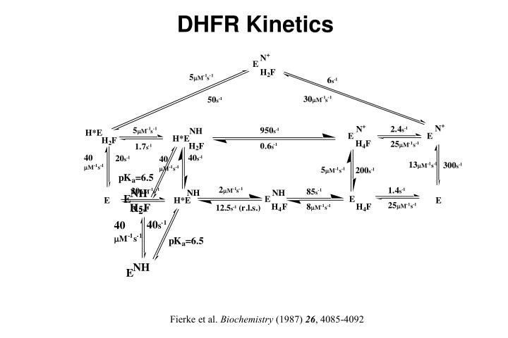 DHFR Kinetics