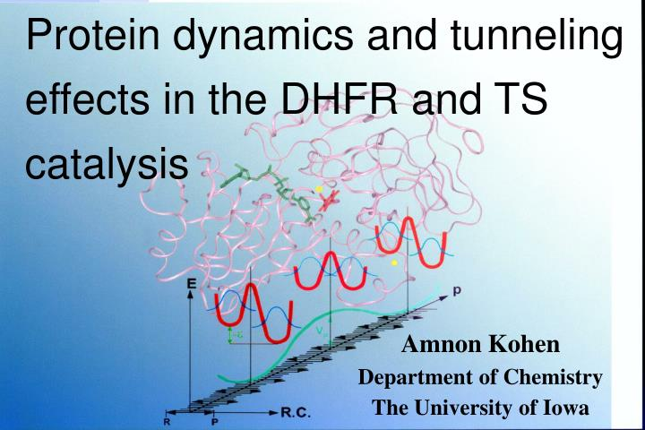 Protein dynamics and tunneling effects in the DHFR and TS catalysis