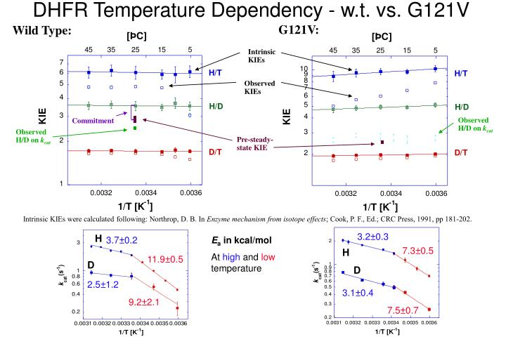 DHFR Temperature Dependency - w.t. vs. G121V
