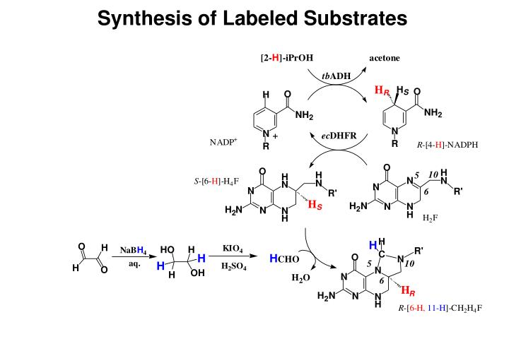 Synthesis of Labeled Substrates