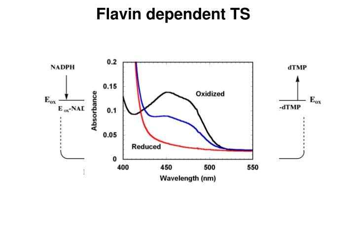 Flavin dependent TS