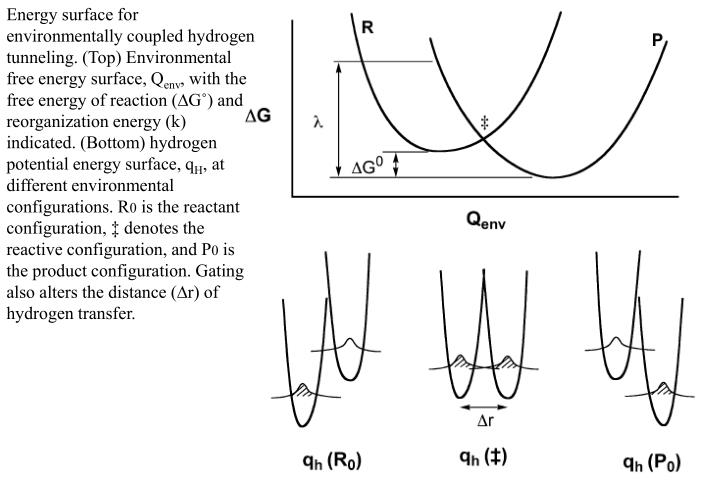 Energy surface for environmentally coupled hydrogen tunneling. (Top) Environmental free energy surface, Q
