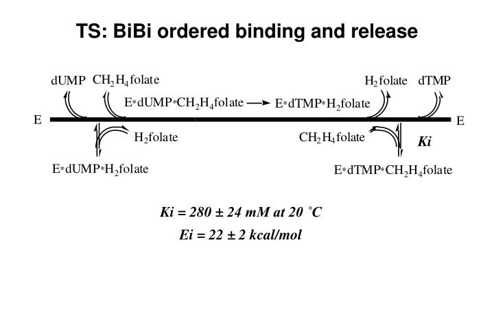 TS: BiBi ordered binding and release