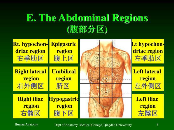 E. The Abdominal Regions