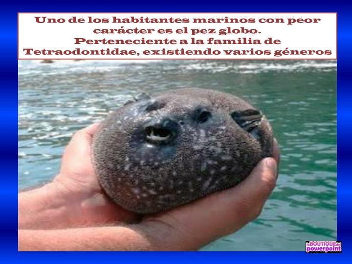 Uno de los habitantes marinos con peor carácter es el pez globo.