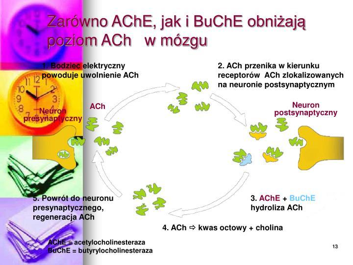 Zarówno AChE
