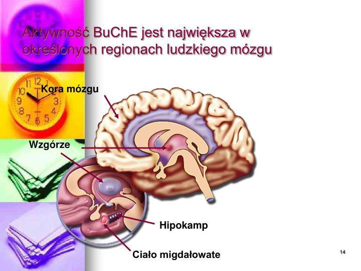 Kora mózgu