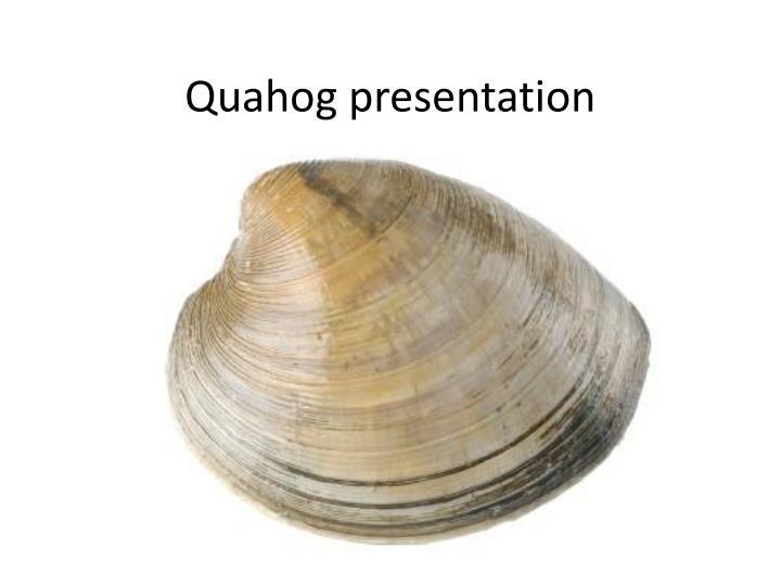 Quahog presentation