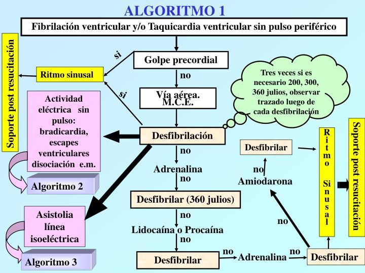 ALGORITMO 1