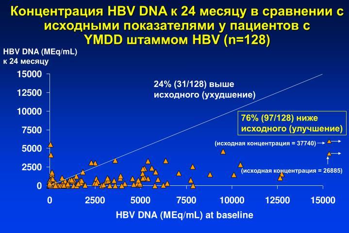 HBV DNA  24