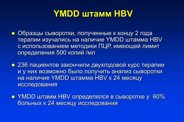 ,    2      YMDD  HBV    ,    500  /