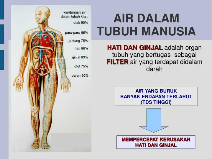 AIR DALAM TUBUH MANUSIA