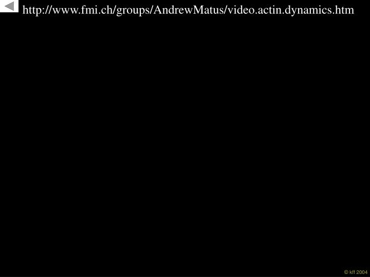 http://www.fmi.ch/groups/AndrewMatus/video.actin.dynamics.htm