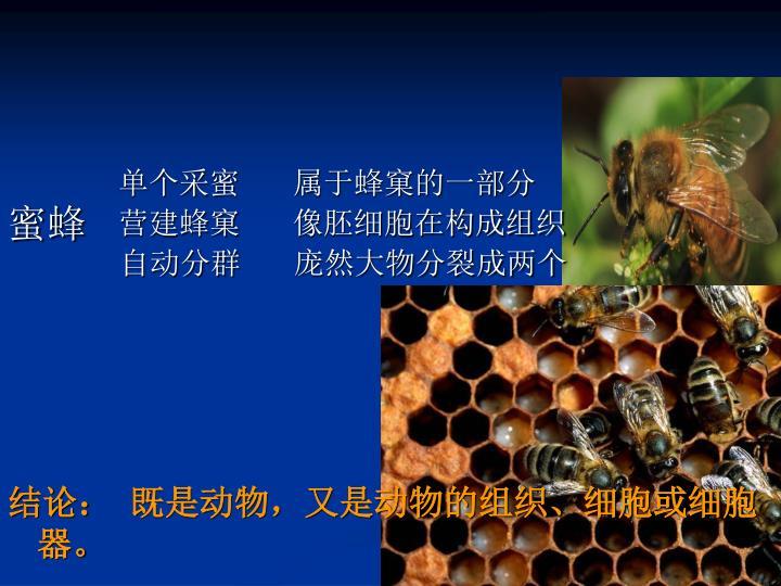 单个采蜜       属于蜂窠的一部分