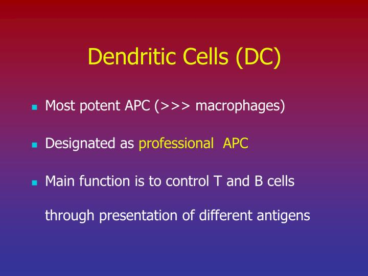 Dendritic Cells (DC)