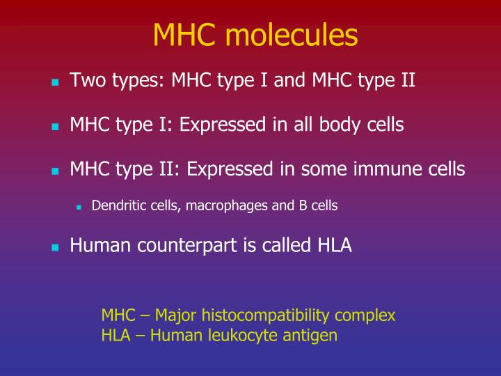 MHC molecules