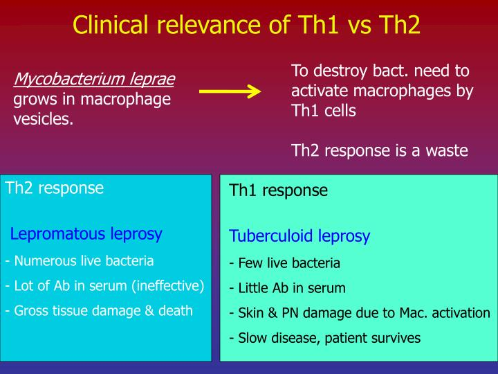 Clinical relevance of Th1 vs Th2
