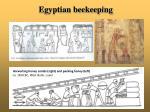 egyptian beekeeping