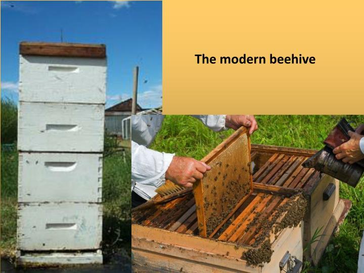 The modern beehive
