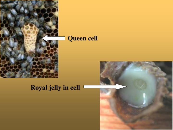 Queen cell