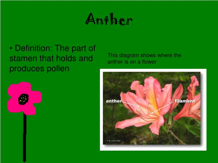 Anther