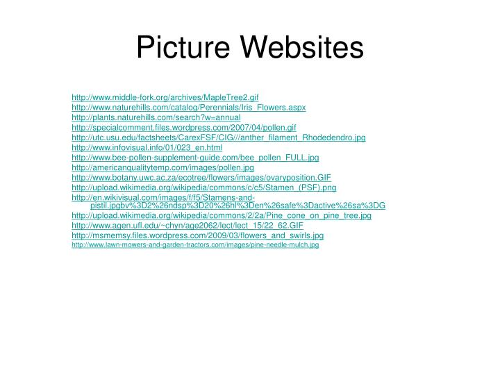 Picture Websites